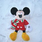 cold mickey