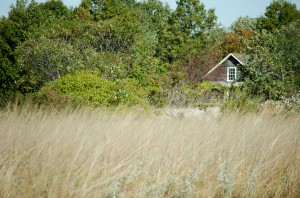 Wind blows across the prairie grass in the Linnaeus Arboretum. Office of Marketing and Communications
