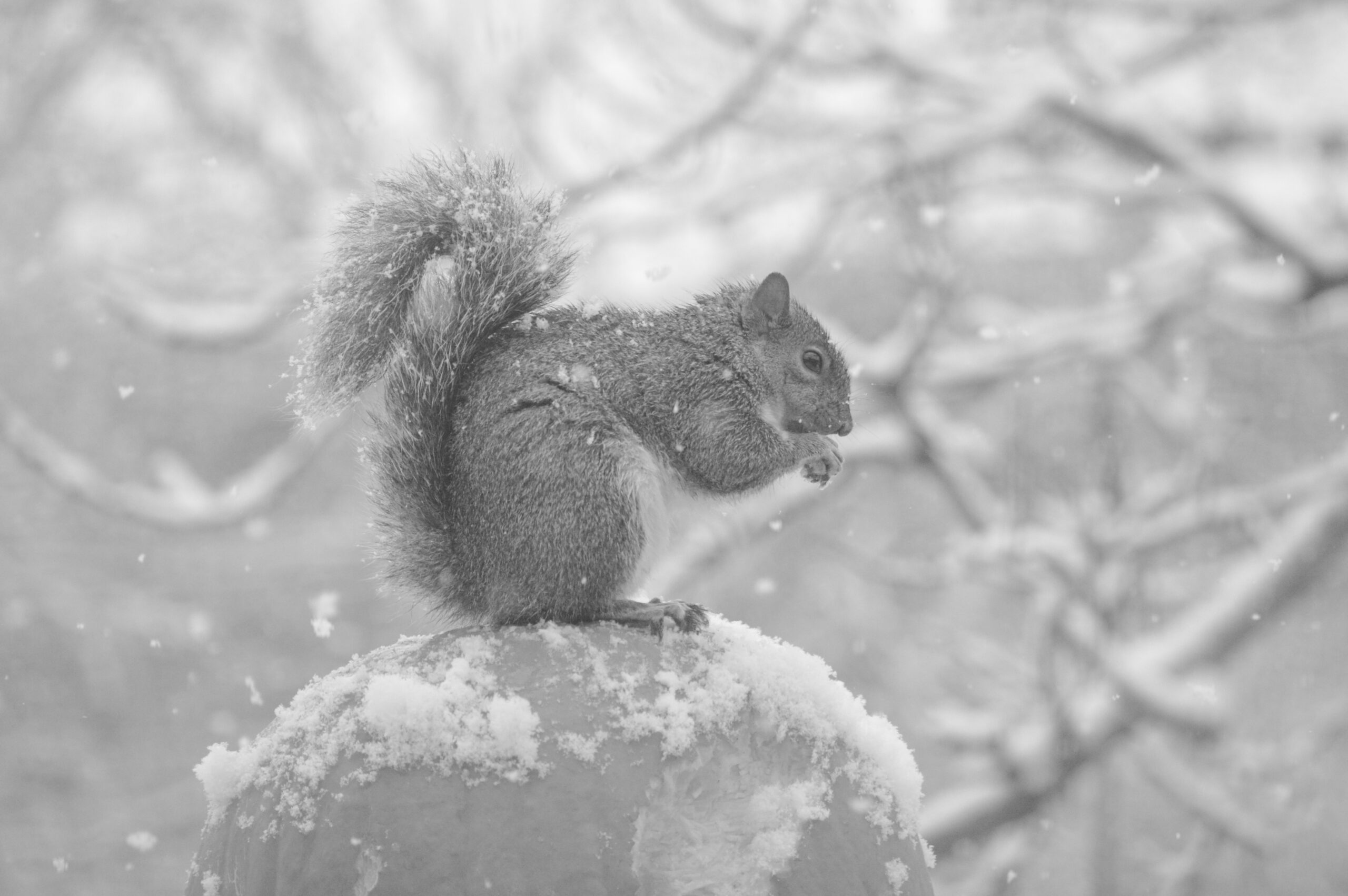 A squirrel very happy to live in Minnesota
